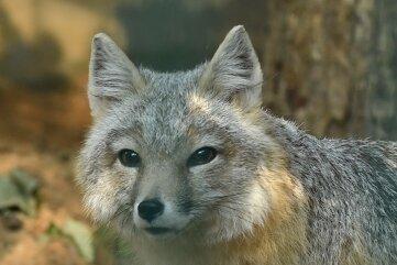 Seltene Prärie-Flitzer sind im Amerika-Tierpark eingezogen