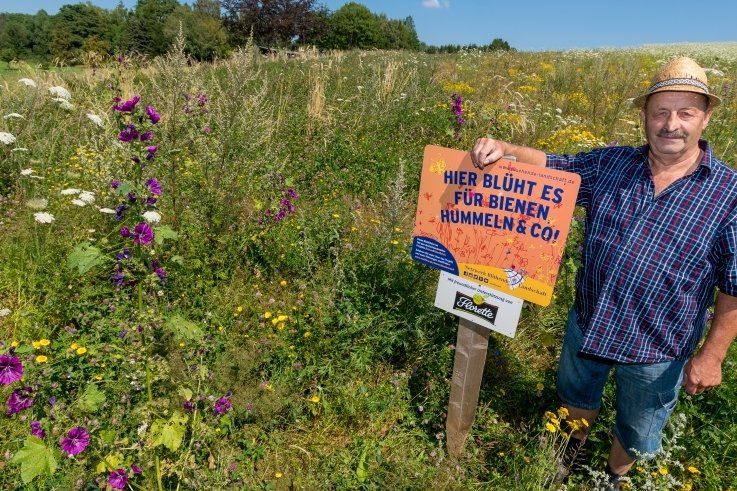 Neben Rotklee und wilder Möhre, die sich besonders stark vermehrt haben, finden sich auf der einen Hektar großen Blühfläche von Wolfgang Löschner beispielsweise auch Malven.