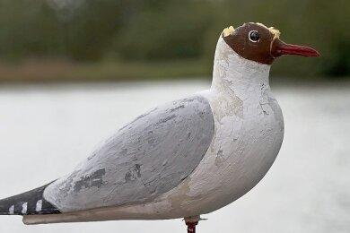 Die extra installierte Attrappe hat keine Lachmöwen zum Bleiben animiert, ist aber von anderen Vögeln am Kopf attackiert worden.