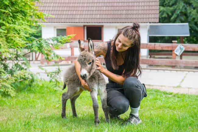 Bundesfreiwilligendienstleistende Josephine Nöbel mit dem Eselfohlen.