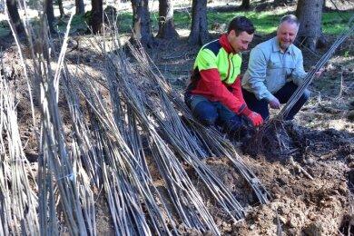 Im Kammgebiet wurde schon im Frühjahr gepflanzt - hier Revierleiter Holger Zimack (r.) und Forstwirt Bruno Ullmann.