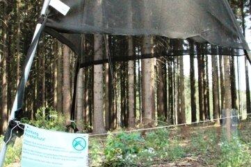 Die neuen Borkenkäfer-Fallen stehen unter anderem im Kuhbergwald bei Netzschkau.