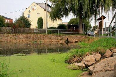 Die Verwaltung und der Ortsvorsteher haben unterschiedliche Auffassungen darüber, welche Arbeiten an diesem Teich hätten erledigt werden müssen.
