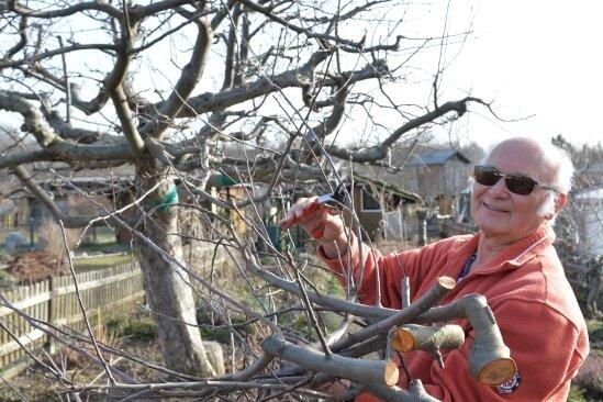 Das frühlingshafte Wetter ist eine gute Gelegenheit, die Obstbäume zu beschneiden. Fachmann Friedhelm Rathmann hat in seinem Garten selbst zur Säge gegriffen.