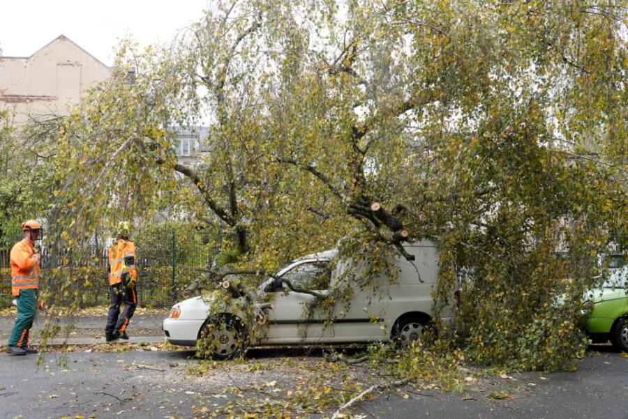 Auf dem Sonnenberg stürzte eine Birke auf zwei Autos.