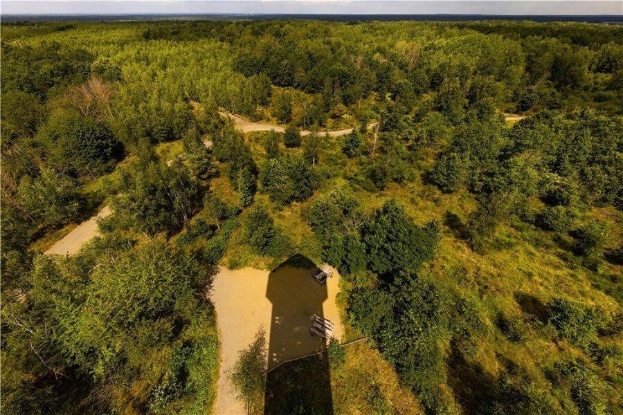 156 Stufen führen hinauf zur Aussichtsplattform des Haselbergturms, der hier seinen Schatten auf die Wildnis der Königsbrücker Heide wirft. In 34 Metern Höhe zeigt sich die Weite des Areals. Vor nicht allzu langer Zeit gab es hier nur karge Sandwüsten.