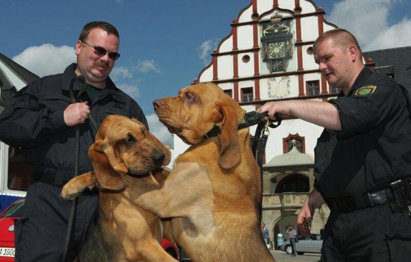"""<p class=""""artikelinhalt"""">Jörg Kempe mit Hippie (links) und Ralf Blechschmidt mit Hidalgo. Die beiden Polizisten arbeiten im Freistaat als erste mit Bluthunden. </p>"""
