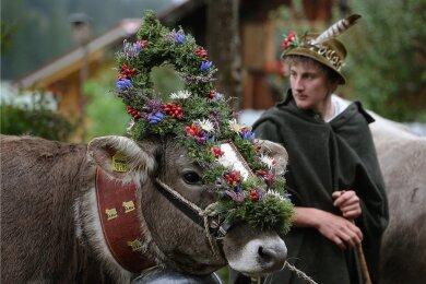 So oder anders könnten auch die Fotos aussehen, die beim Kostümwettbewerb im Vogtland entstehen, zu dem der Jungzüchterclub aufgerufen hat. In Bayern schmücken sich Bauern und Rinder heraus, wenn die Tiere alljährlich von den Almwiesen in den Bergen in den Stall gebracht werden.