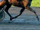 Rennpferd Justify muss Karriere nach Verletzung beenden