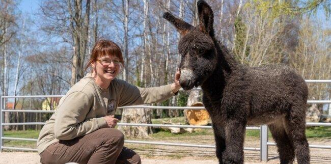 Die Überraschung des Jahres: Eigentlich gilt die Esel-Familie im Falkensteiner Tiergarten als komplett - der Chef der Herde ist kastriert. Doch dann kommt im März 2019 plötzlich eine kleine Stute zur Welt. Ups! Das Tier darf bleiben - und bekommt den Namen Fanny.