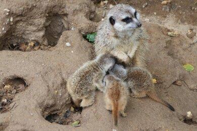 Die Jungtiere werden noch von der Mutter gesäugt.