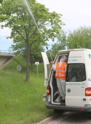 Schädlingsbekämpfung auf der S 34 nahe Leisnig.