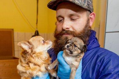 Tierheim-Mitarbeiter Chris Wolfrum kümmert sich derzeit liebevoll um die beschlagnahmten Chihuahua. In einem Zimmer sind derzeit vier Hündinnen und sechs Welpen untergebracht.