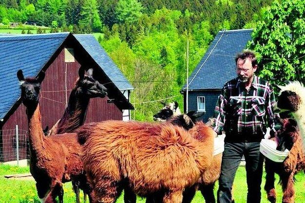 Andrea und Michael Thierfelder aus Auerbach züchten Lamas.