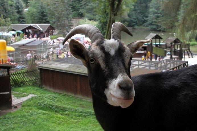 """Buntes Treiben herrschte gestern zum Fest im kleinen Peniger Tierpark """"Köbe""""."""