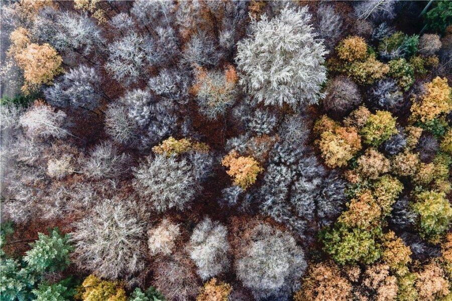 Wolfgang Büscher hat drei Jahreszeiten lang im Wald gelebt und findet, dass der im Herbst am intensivsten riecht. Auf diesem Beispielfoto aus dem vergangenen November tragen einige Bäume bereits Raureif, andere noch bunte Blätter. Aber auch das Ausmaß an kranken Bäumen ist dem Autor in seiner Zeit im Wald bewusst geworden.