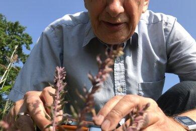 Professor Dietrich Stoyan fotografiert den Acker-Zahntrost. Er hofft auch auf eine Sägehornbiene, die auf die Blüten spezialisiert ist.