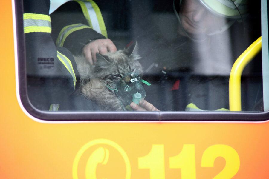 Feuerwehr beatmet Katze
