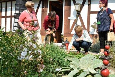 Erfahrungsaustausch im Kräutergarten zwischen (von links) Silke Lang (Jößnitz), Melanie Achtmann (Marktrodach), Karin Hohl (Kornbach) und Anita Seifert (Pausa) bei der Premiere der Unkrautkonferenz.
