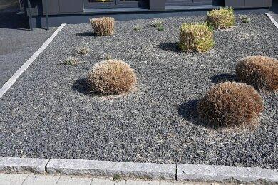 Wenige Pflanzen ragen aus einem Vorgarten mit grauen und schwarzen Kieselsteinen. Schottergärten sind für Insekten nutzlos.