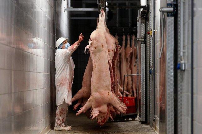 Eine Mitarbeiterin zählt Schweinehälften im Schlachtbetrieb in Belgern (Nordsachsen). Der Betrieb gehört zu den kleineren Schlachthöfen. Er beschäftigt etwa 100 Mitarbeiter aus der Region.