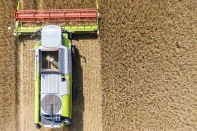 Getreideernte bei Lauterbach.