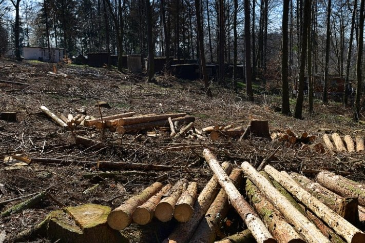 Fast 150 Bäume mussten im Bereich zwischen Straße und Campingplatz gefällt werden. Hier soll nun eine naturnahe Minigolfanlage entstehen.