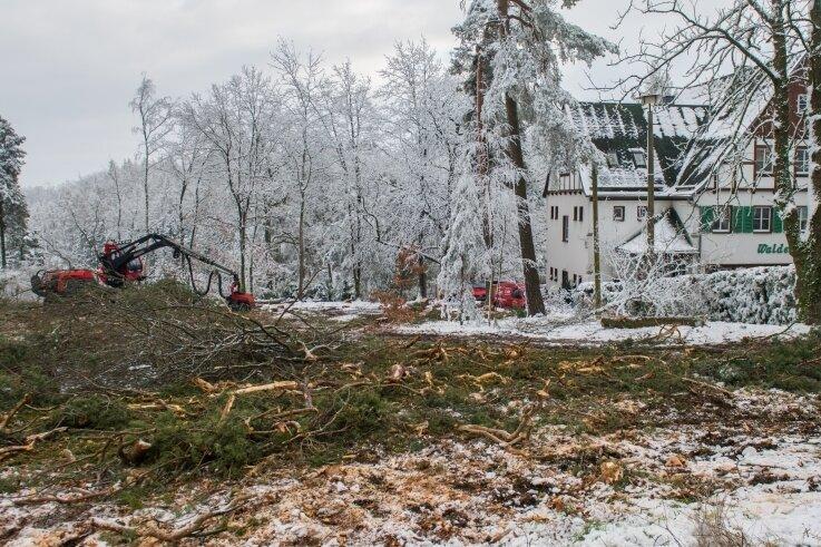 """Die Baumfällungen an der """"Walderholung"""" haben für Aufregung gesorgt, waren aber notwendig. Der Borkenkäfer war hier aktiv."""