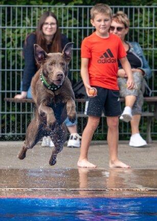 Der dreieinhalbjährige Labrador Gismo konnte gar nicht oft genug ins Wasser springen.