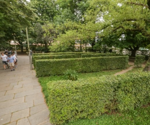 Die Hecken im Stadthallenpark, die kleine grüne Nischen bilden, sollen gerodet werden. Schießt die Stadt mit dem Plan übers Ziel hinaus?