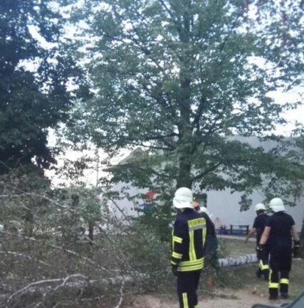 """Feuerwehrleute aus Schwarzbach haben am Freitag eine Birke im Kindergarten """"Hüttenzwerge"""" aus Sicherheitsgründen gefällt. Der Baum wies bereits Trockenschäden in der Krone auf."""
