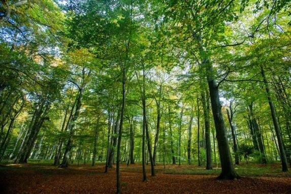 """Nach Orkan """"Friederike"""": Betreten von Freiberger Wäldern verboten"""