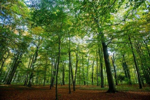 Studie: Werdauer Wald wäre gutes Wildnisgebiet