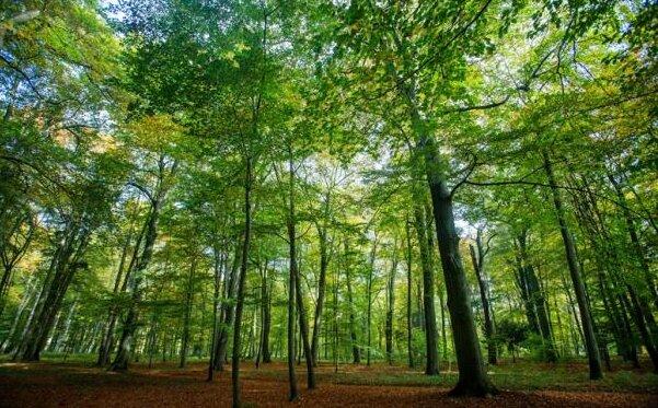 Forstminister stellt Millionenhilfe für Wald in Aussicht