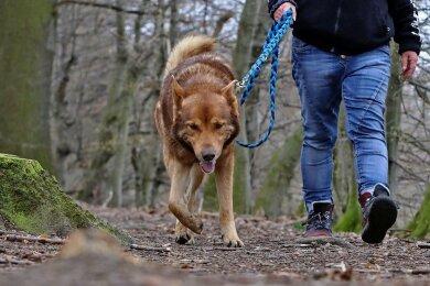 Die Hundesteuer in Oberwiera könnte erhöht werden. Die Diskussion darüber im Gemeinderat ist in Gang gekommen.