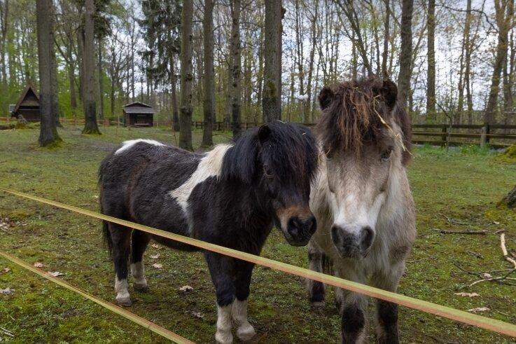 Die beiden Ponys und der Esel haben das Tiergehege am Pöhlberg als erste verlassen, leben nun auf einem Ponyhof in Bayern.