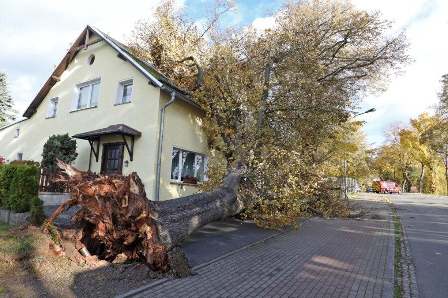 """An der Goldbachstraße stürzte ein Baum vor dem einstigen Lokal """"Goldbachschenke"""" um."""