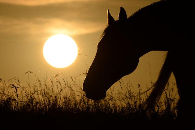 Gerücht über Pferdehasser entpuppt sich als Finte