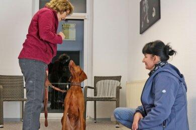 Susan Beyer (rechts) kam kurz vor dem Teil-Lockdown zu Antje Hebel. Sie fragt sich, warum Jessy so aggressiv ist. Hundepsychologin machte sich ein Bild von dem Tier. Dann ging es gemeinsam an die Therapie.