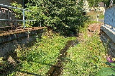 Anwohner kritisieren den Zustand des Mühlbachs, hier am städtischen Grundstück an der Schmiede. Die Stadt pocht aber auf Naturschutz.