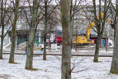 Nach dem Willen des Stadtrates sollen diese Bäume nun stehen bleiben.