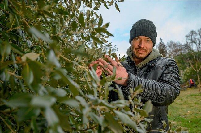 Matthias Helbig aus dem hat schon 2006 in seinem Garten Steineichen angepflanzt. Eigentlich sind die Bäume im Mittelmeerraum zuhause.