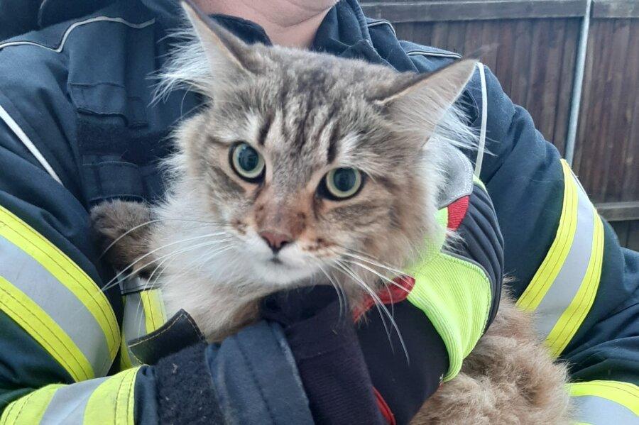 Diese Katze hat die Feuerwehr in Mittweida von einem Dach gerettet.