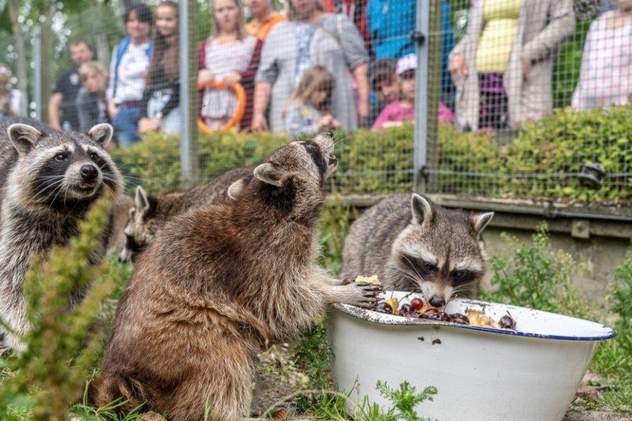 Wilde Mahlzeit mit vielen Beobachtern