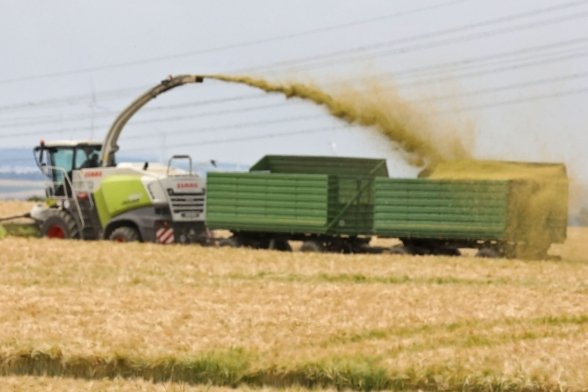 In Lobsdorf wird unreife Wintergerste vom Feld geholt und gehäckselt. Landwirte verfolgen damit ein klares Ziel.