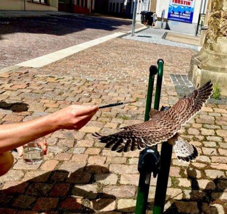 Mit einem Pinsel gaben Anwohner dem kleinen Falken Wasser.