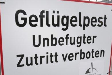 """Ein Schild mit dem Schriftzug """"Geflügelpest"""" hängt an einem Zaun eines Geflügelmastbetriebes. Auch in Burgstädt gibt es einen Fall."""