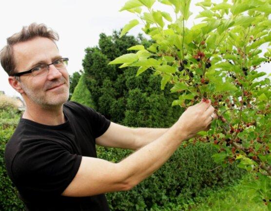 Denis Weigel an seinem Maulbeerbaum, der in diesem Jahr reichlich Früchte trägt.