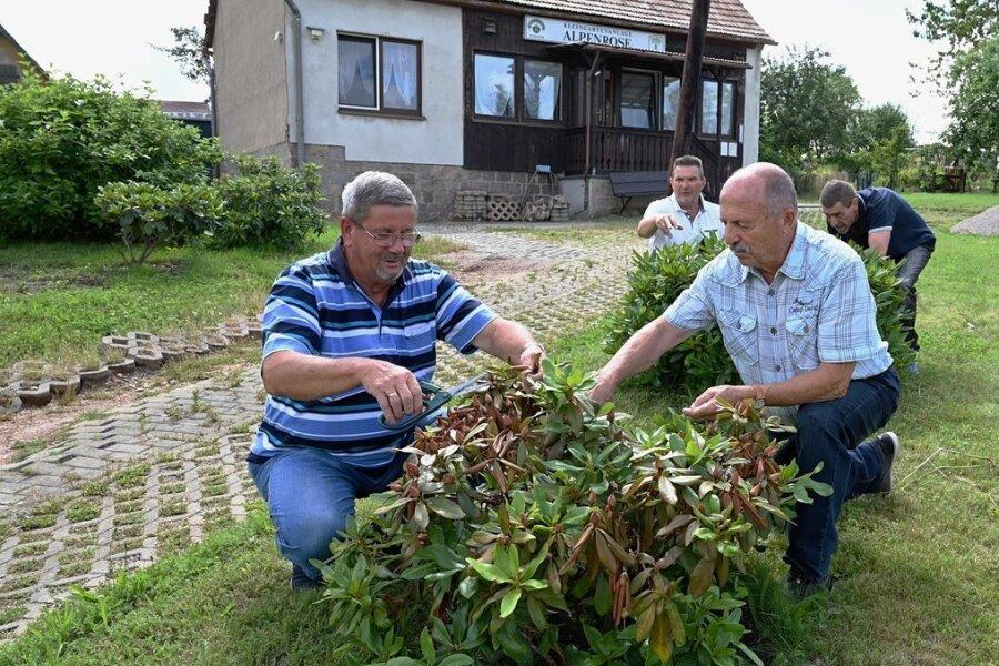 Edwin Joost, Henry Wenzel, Lothar Pioch und Steffen Wenzel (v. l.) bei der Pflege der auch Alpenrosen genannten Rhododendren am Weg zum Vereinsheim nach der Blüte.
