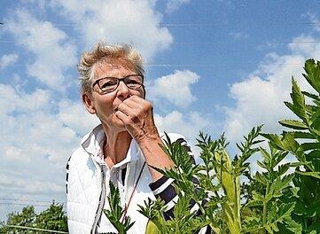 Kostprobe: Eva Wagner entdeckt den Geschmack von Pastinakenblättern.